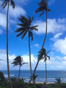 Serenity. Beauty. Kauai.
